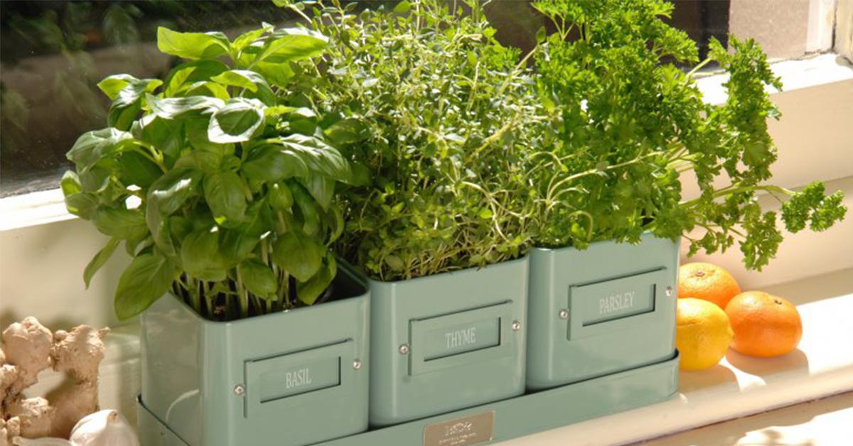 Как сажать зелень в домашних условиях