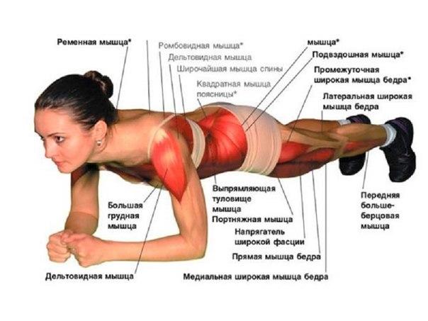 Через месяц ты получишь новое тело! Силовые упражнения в планке - не займут больше 15 минут.