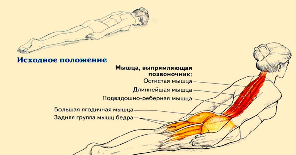 Самое эффективное упражнение для поясницы