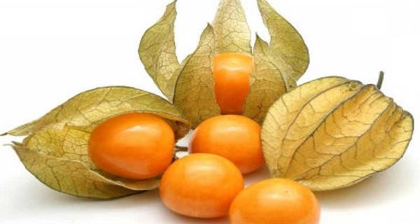 cape-gooseberry-fruit-images