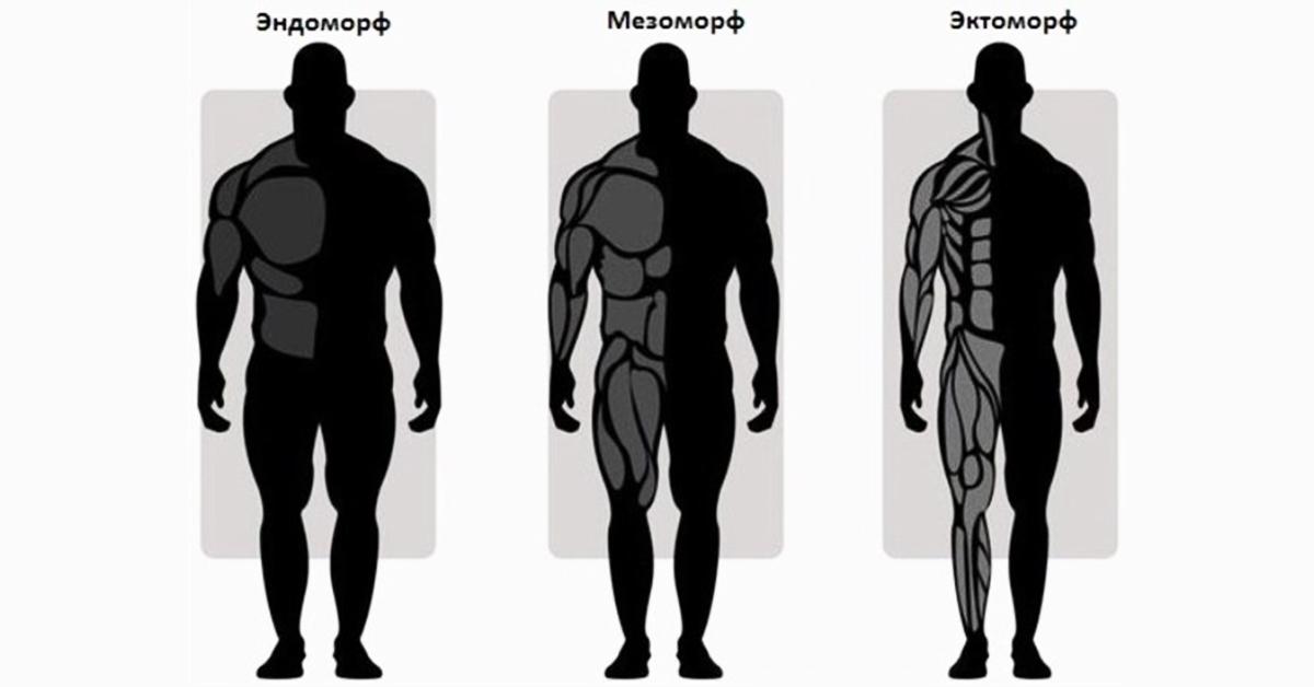 представляет собой виды телосложения у мужчин названия картинки что