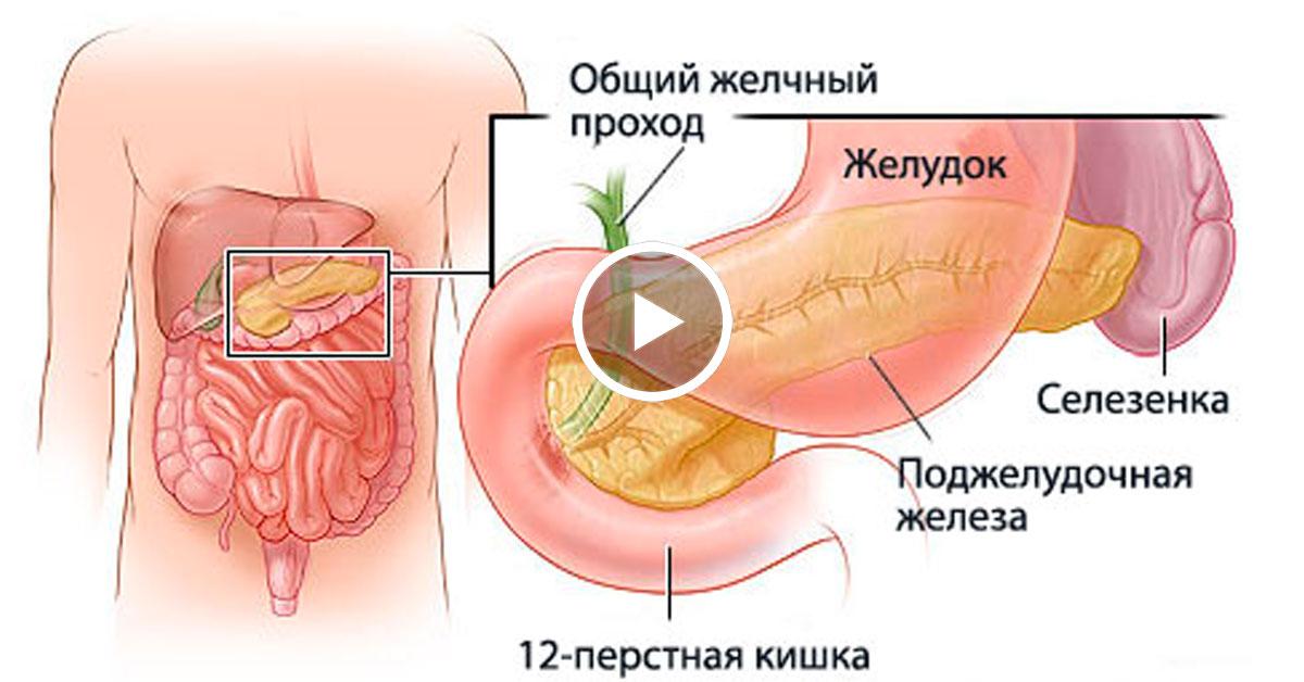 лечение печени от паразитов