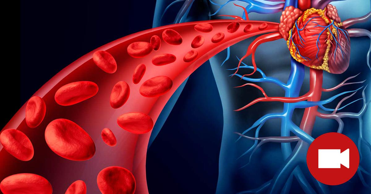 Чем можно почистить кровь в организме