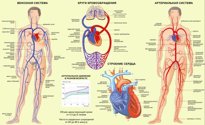 Икроножные мышцы в домашних условиях 102