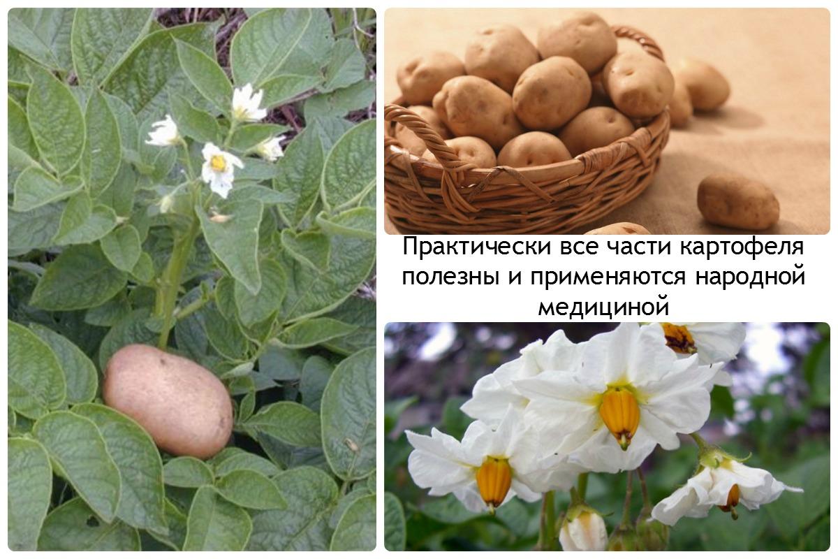 Как влияит на похудание картофельный сок