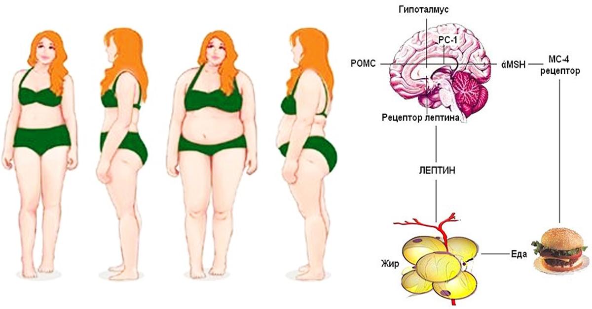как похудеть чтобы лицо не худело
