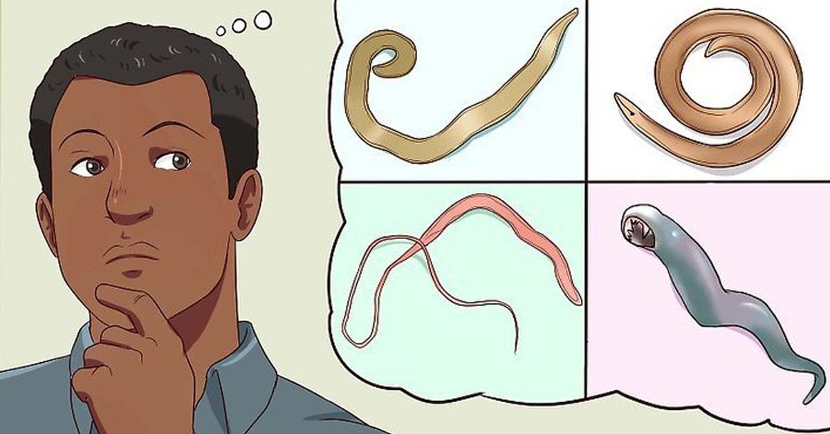 чем выгнать паразитов из организма народными средствами